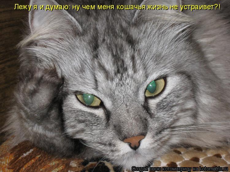 Котоматрица: Лежу я и думаю: ну чем меня кошачья жизнь не устраивет?!
