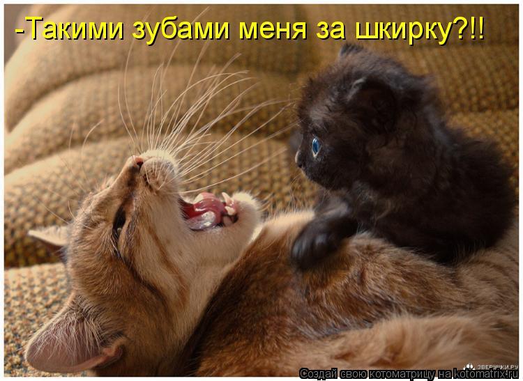 -Такими зубами меня за шкирку?!!