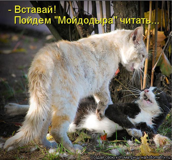 """Котоматрица: - Вставай!  Пойдем """"Мойдодыра"""" читать..."""