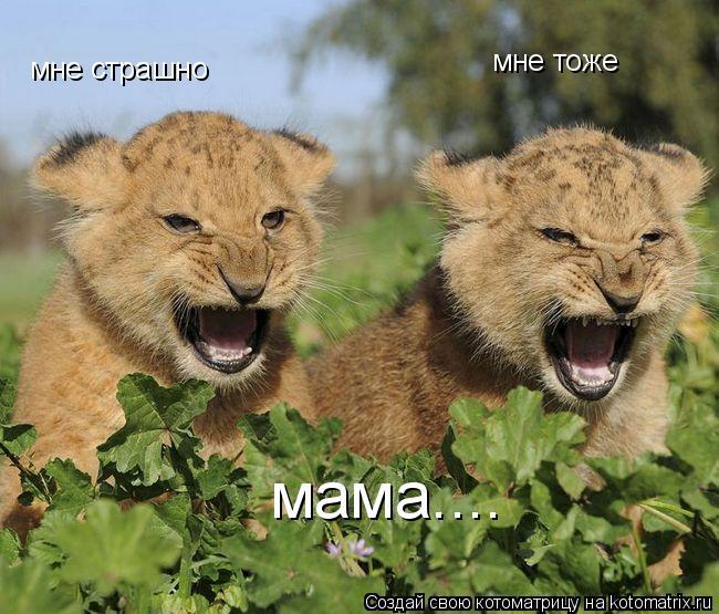 Котоматрица: мне страшно мне тоже мама....