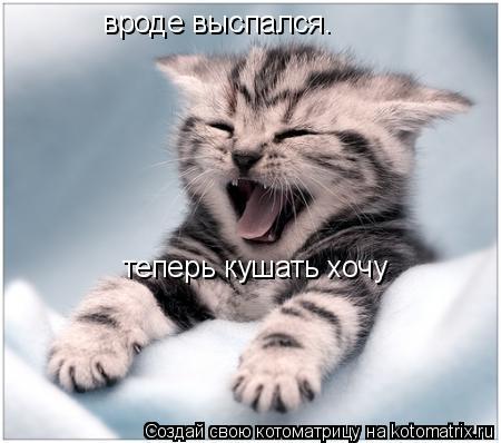 Котоматрица: вроде выспался.  теперь кушать хочу