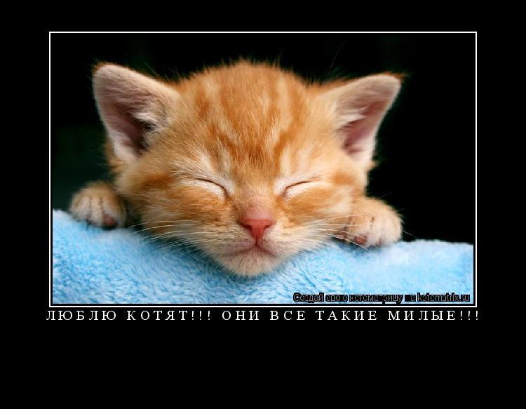 Котоматрица: Люблю котят!!! Они все такие милые!!!