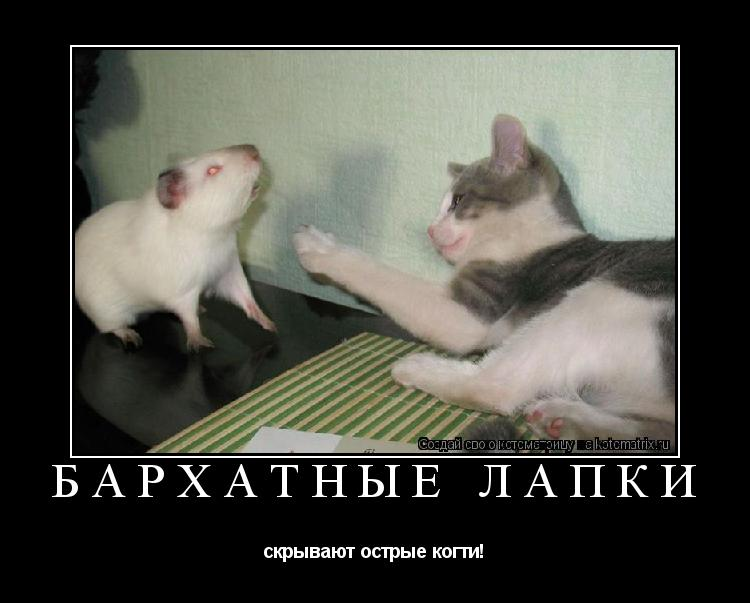 Котоматрица: Бархатные лапки  скрывают острые когти!