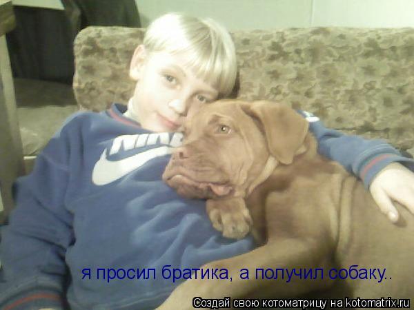 Котоматрица: я просил братика, а получил собаку..