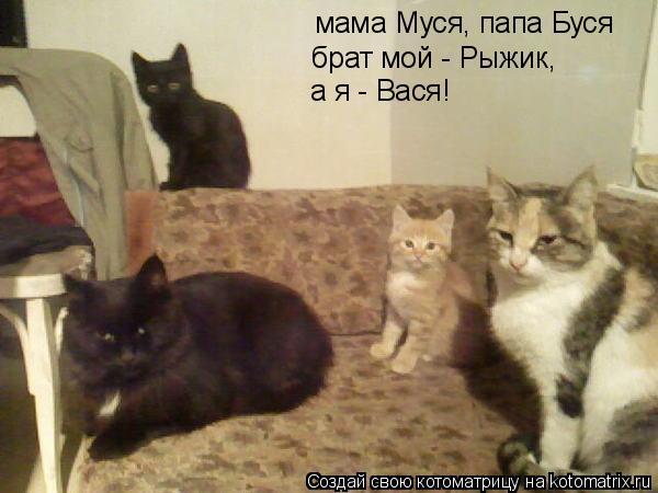 Котоматрица: мама Муся, папа Буся брат мой - Рыжик, а я - Вася!