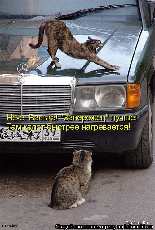 """Котоматрица: Не-е, Васька! """"Запорожец"""" лучше! Там капот быстрее нагревается!"""