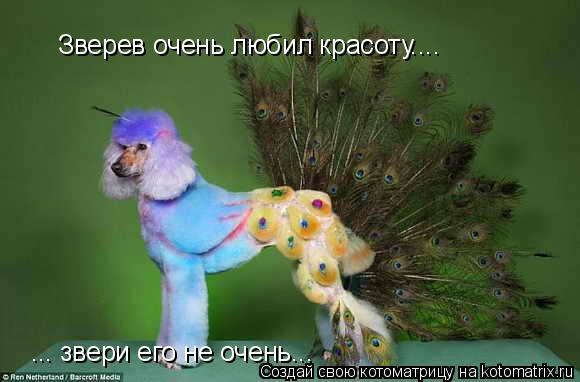 Котоматрица: Зверев очень любил красоту.... ... звери его не очень...