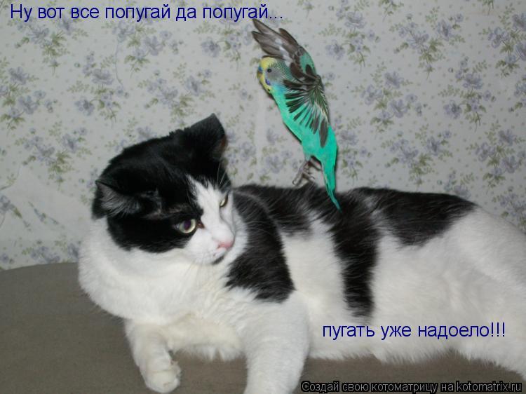 Котоматрица: Ну вот все попугай да попугай... пугать уже надоело!!!