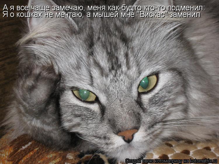 """Котоматрица: А я все чаще замечаю, меня как-будто кто-то подменил: Я о кошках не мечтаю, а мышей мне """"Вискас"""" заменил"""