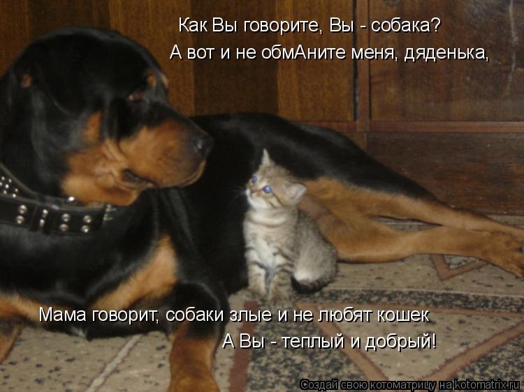 Котоматрица: Как Вы говорите, Вы - собака? Мама говорит, собаки злые и не любят кошек А Вы - теплый и добрый! А вот и не обмАните меня, дяденька,