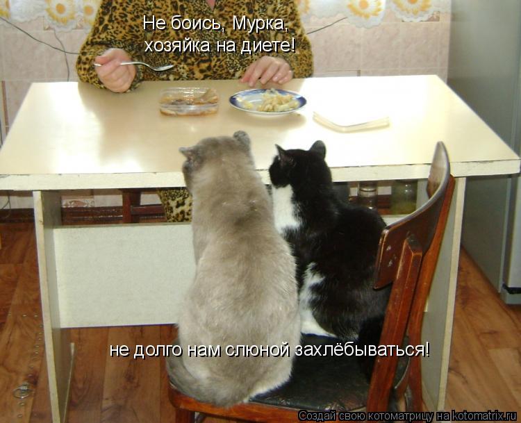 Котоматрица: Не боись, Мурка, хозяйка на диете! не долго нам слюной захлёбываться!