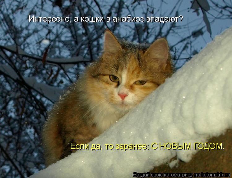 Котоматрица: Интересно, а кошки в анабиоз впадают? Если да, то заранее: С НОВЫМ ГОДОМ.