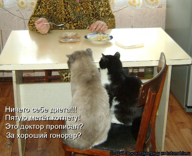 Котоматрица: Ничего себе диета!!! Пятую метёт котлету! Это доктор прописал? За хороший гонорар?