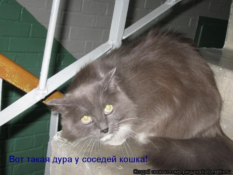 Котоматрица: Вот такая дура у соседей кошка!