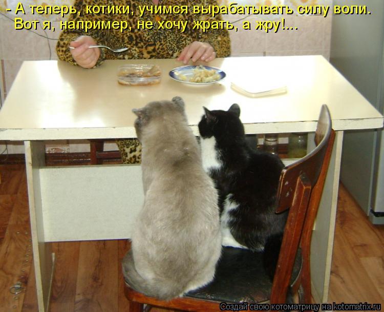 Котоматрица: - А теперь, котики, учимся вырабатывать силу воли. Вот я, например, не хочу жрать, а жру!...