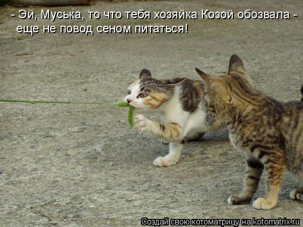 Котоматрица: - Эй, Муська, то что тебя хозяйка Козой обозвала - еще не повод сеном питаться!