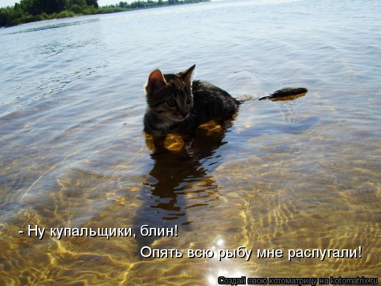 Котоматрица: - Ну купальщики, блин! Опять всю рыбу мне распугали!