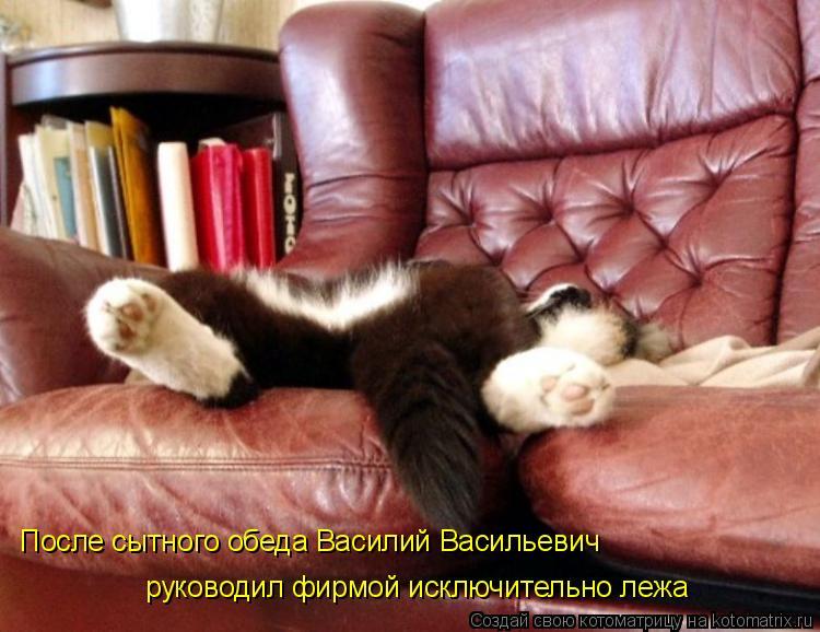 Котоматрица: После сытного обеда Василий Васильевич руководил фирмой исключительно лежа