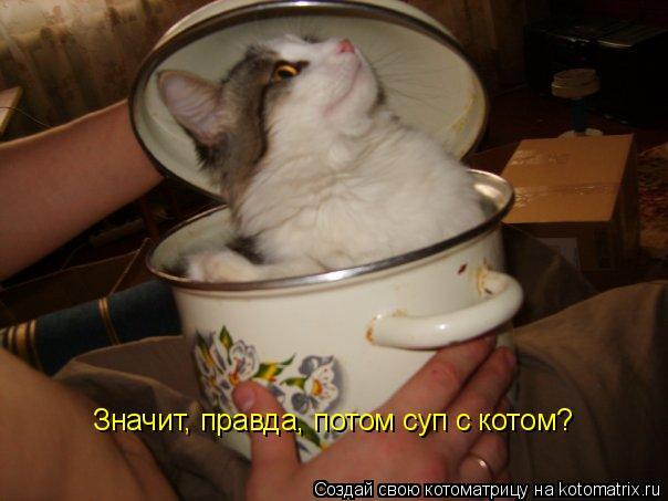 Котоматрица: Значит, правда, потом суп с котом?