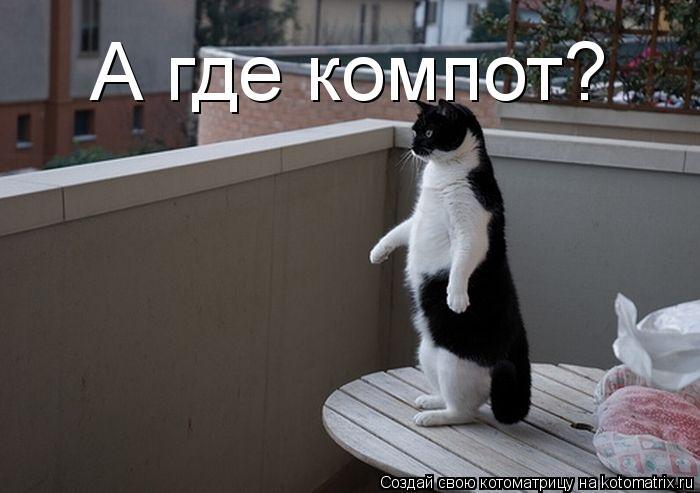 Котоматрица: А где компот?