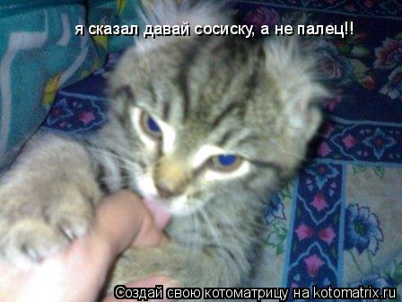 Котоматрица: я сказал давай сосиску, а не палец!!