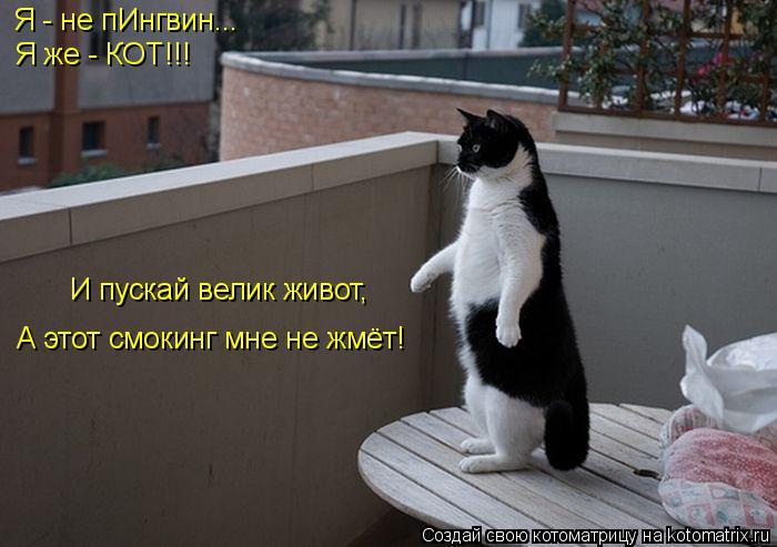Котоматрица: Я - не пИнгвин... Я же - КОТ!!! А этот смокинг мне не жмёт! И пускай велик живот,