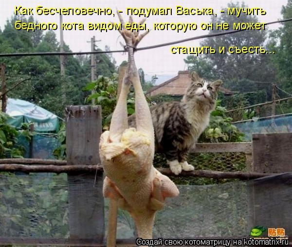 Котоматрица: Как бесчеловечно, - подумал Васька, - мучить бедного кота видом еды, которую он не может стащить и съесть...