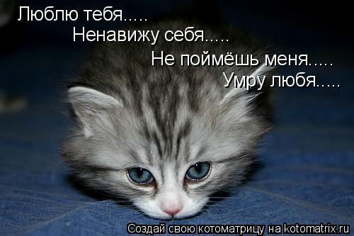Котоматрица: Люблю тебя..... Ненавижу себя..... Не поймёшь меня..... Умру любя.....