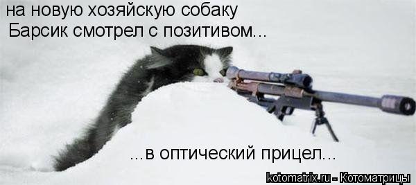 Котоматрица: на новую хозяйскую собаку  Барсик смотрел с позитивом... ...в оптический прицел...