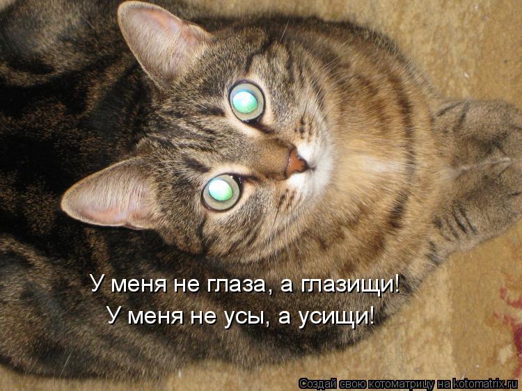 Котоматрица: У меня не глаза, а глазищи! У меня не усы, а усищи!
