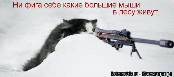 Котоматрица: Ни фига себе какие большие мыши в лесу живут...