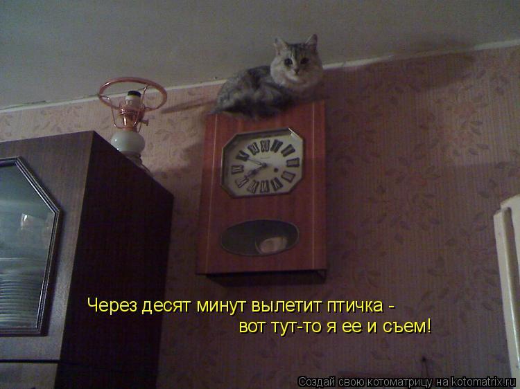 Котоматрица: Через десят минут вылетит птичка -  вот тут-то я ее и съем!