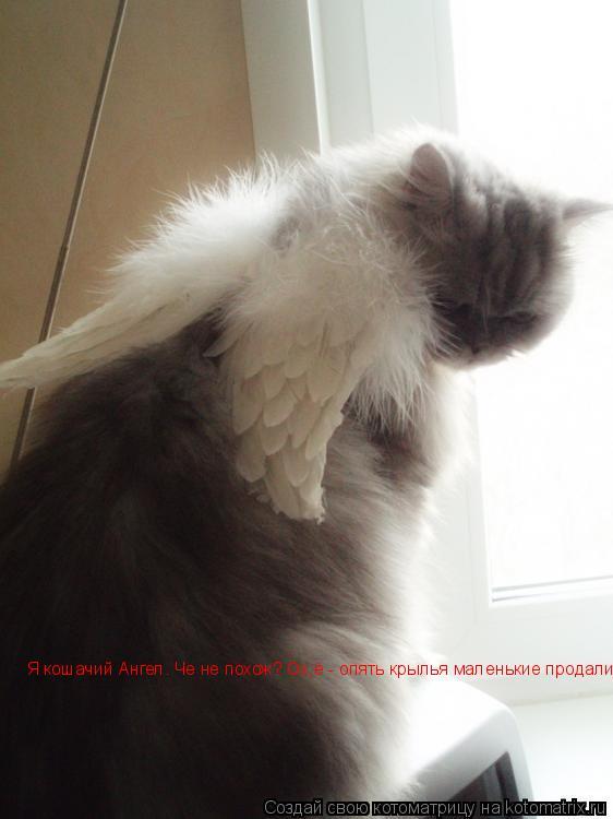 Котоматрица: Я кошачий Ангел. Че не похож? Ох,ё - опять крылья маленькие продали