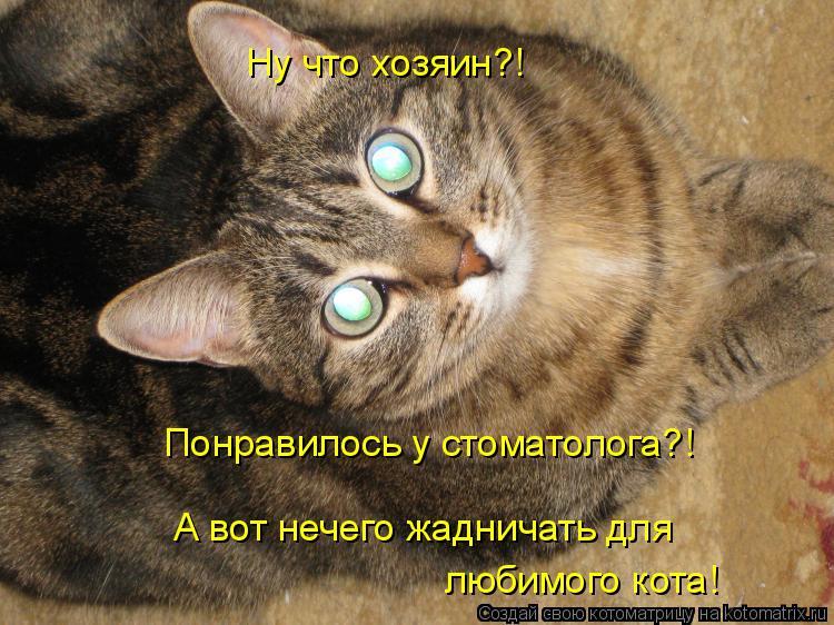 Котоматрица: Ну что хозяин?! Понравилось у стоматолога?! А вот нечего жадничать для любимого кота!