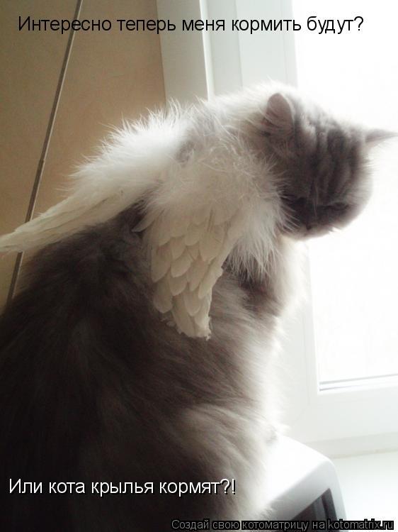 Котоматрица: Интересно теперь меня кормить будут? Или кота крылья кормят?!