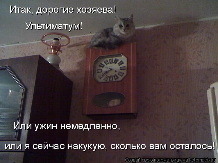 Котоматрица: Итак, дорогие хозяева! Ультиматум! Или ужин немедленно, или я сейчас накукую, сколько вам осталось!