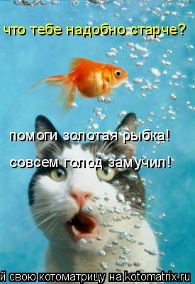Котоматрица: что тебе надобно старче? помоги золотая рыбка! совсем голод замучил!