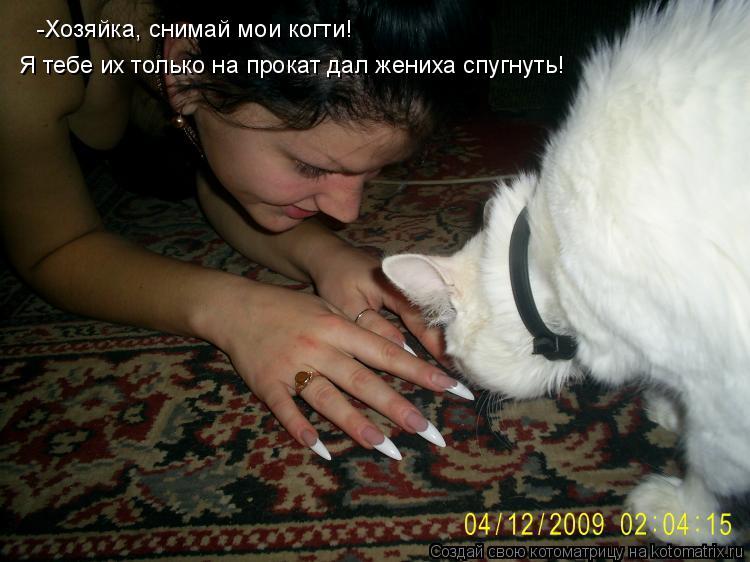 Котоматрица: -Хозяйка, снимай мои когти!  Я тебе их только на прокат дал жениха спугнуть!