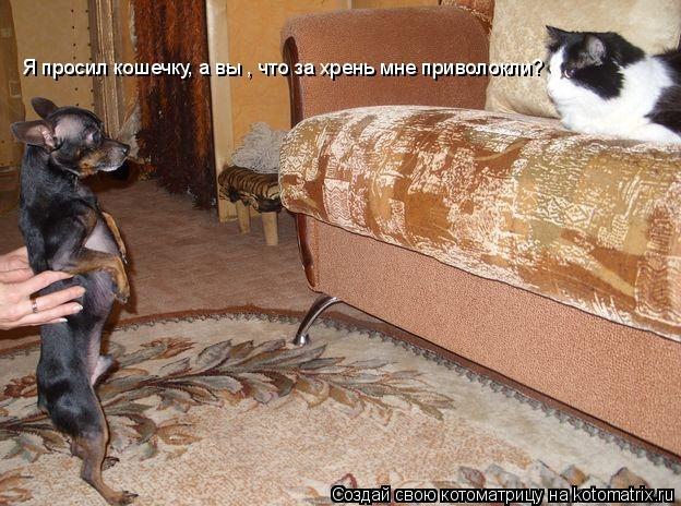 Котоматрица: Я просил кошечку, а вы , что за хрень мне приволокли?