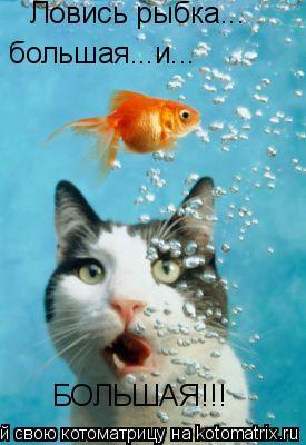 Котоматрица: Ловись рыбка... большая...и... БОЛЬШАЯ!!!