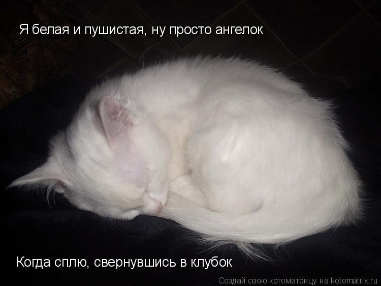 Котоматрица: Я белая и пушистая, ну просто ангелок Когда сплю, свернувшись в клубок