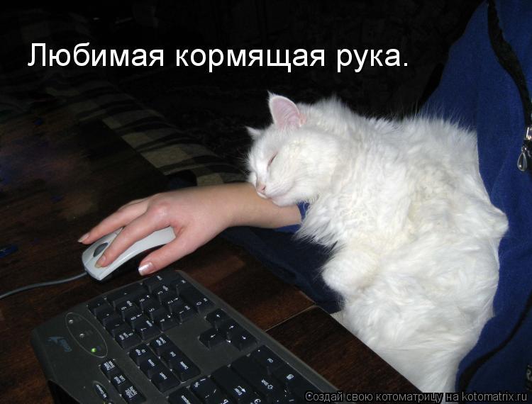 Котоматрица: Любимая кормящая рука.