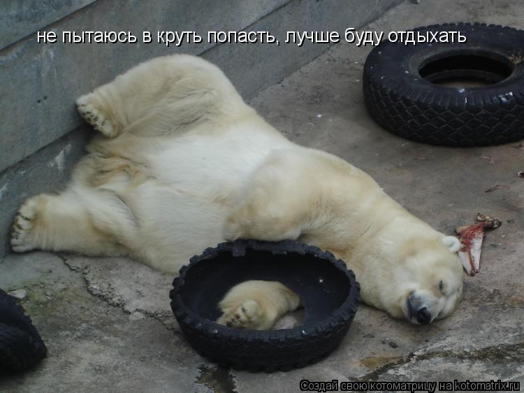 Котоматрица: не пытаюсь в круть попасть, лучше буду отдыхать