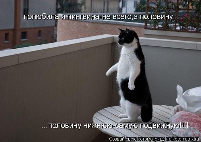 Котоматрица: полюбила я пингвина-не всего,а половину... ...половину нижнюю-самую подвижную!!!!