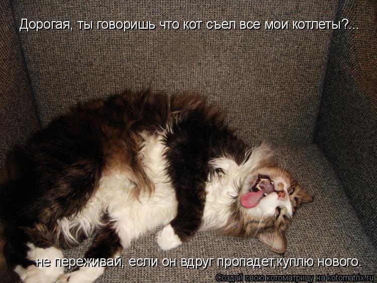 Котоматрица: Дорогая, ты говоришь что кот съел все мои котлеты?... не переживай, если он вдруг пропадет,куплю нового.