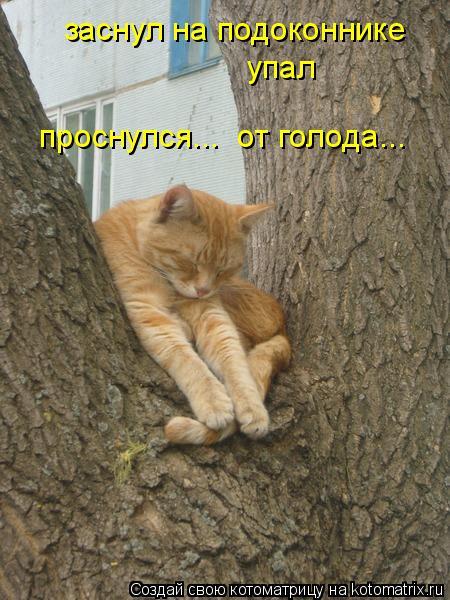 Котоматрица: заснул на подоконнике упал проснулся...  от голода...