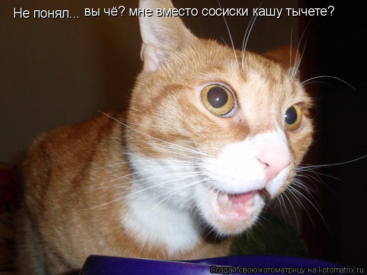 Котоматрица: Не понял... вы чё? мне вместо сосиски кашу тычете?