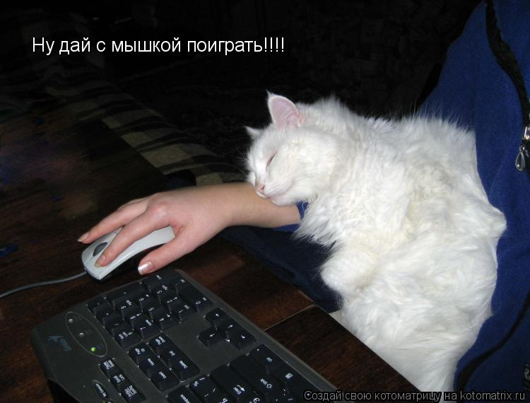 Котоматрица: Ну дай с мышкой поиграть!!!!