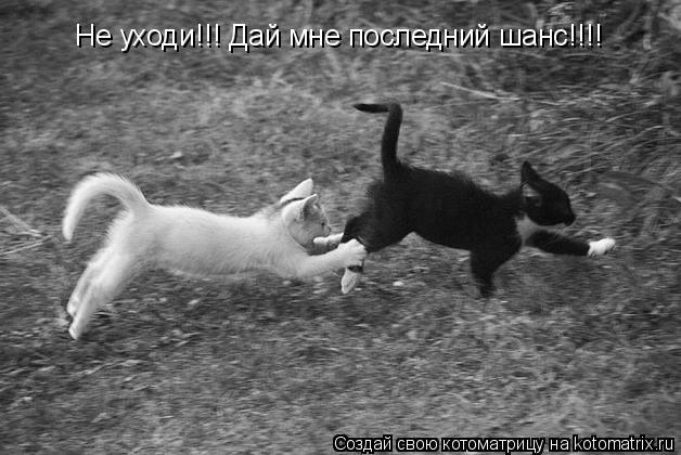 Котоматрица: Не уходи!!! Дай мне последний шанс!!!!