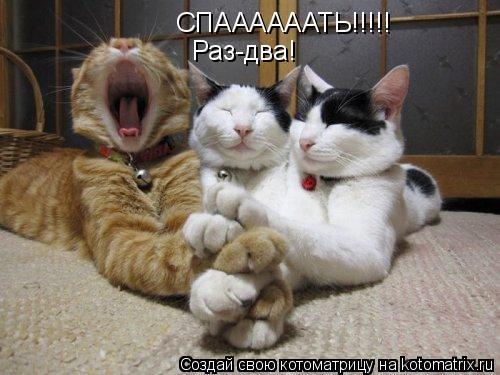Котоматрица: СПААААААТЬ!!!!! Раз-два!